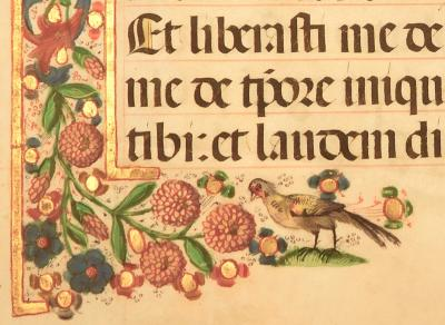 Medieval Manuscript with an illustrated bird